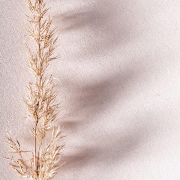 feines NaturPapier mit Trockenblumen